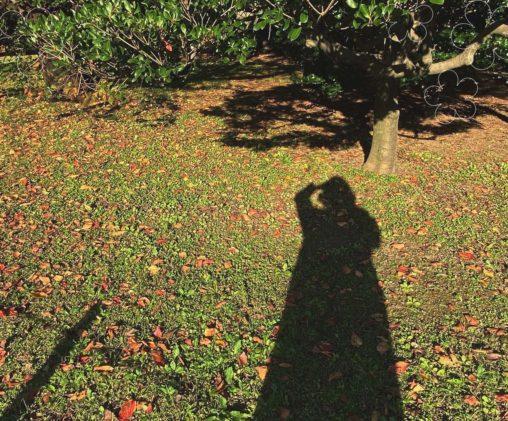 garden ハナヨウヒン